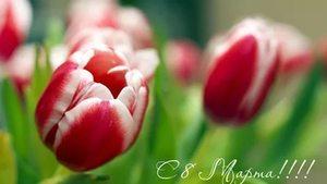 Поздравляем всех женщин с праздником 8 марта! Всем заказчицам скидка 15% до 15 марта!