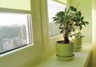 Рулонные шторы на окнах 12